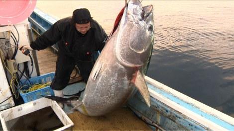 マグロ 年収 大間 漁師
